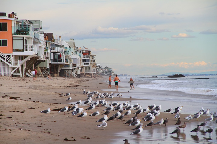 Malibu Road Ocean Front Homes For Sale in Malibu, California